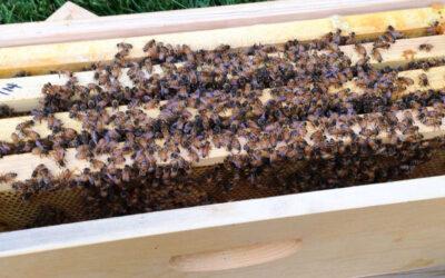 Nucleus hive