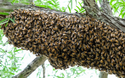 What is the function of a swarm?