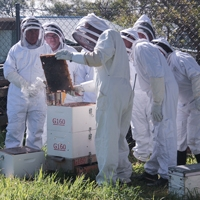 Introduction to Beekeeping 210320